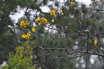 Flowers at Mountain Pine Ridge