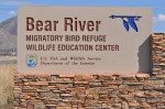 Bear River Migratory Bird Refuge is just about an hour north of Salt Lake City, Utah