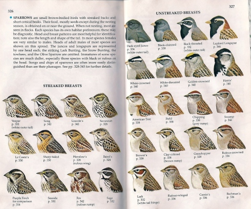 "Trying to tell the difference among sparrows. (This is from our Golden Books ""A Guide to Field Identification: Birds of North America""  copyright 1983. It's our favorite field guide--so compact."