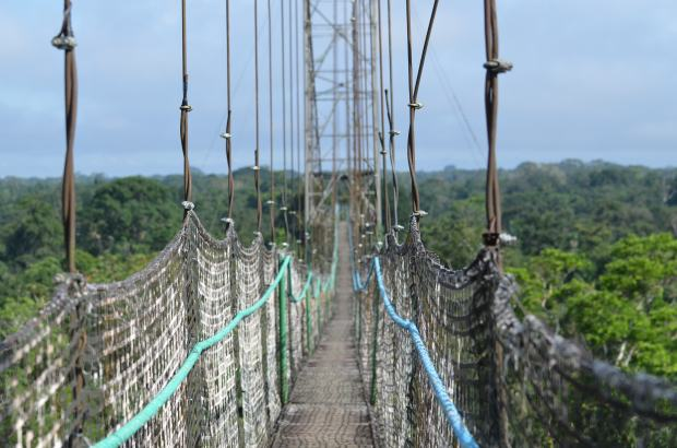 Canopy Walkway at Sacha Lodge