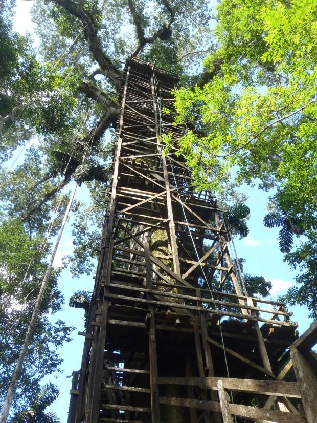 Kapok Tower