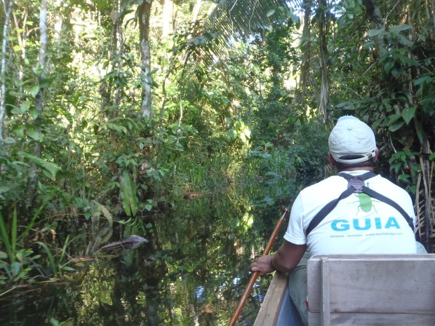 Marcello takes us to the Kapok Tower down one of the many creeks in the Amazon.