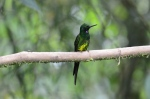 Now let's get a look at the front of that Long-tailed Sylph who's looking all sparkly.