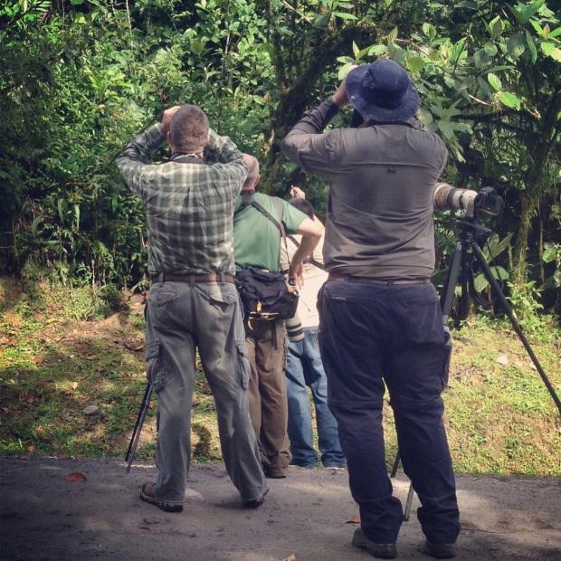 What birders do.