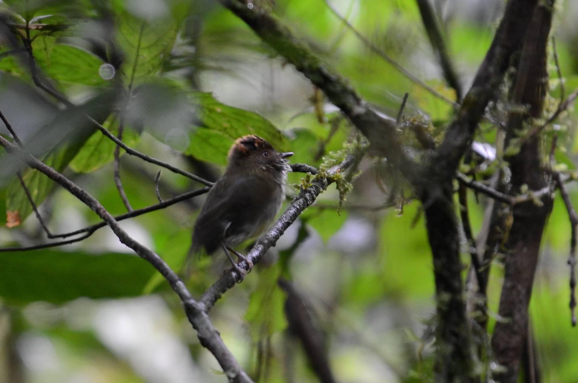 Finca Cantaros | San Vito Bird Club