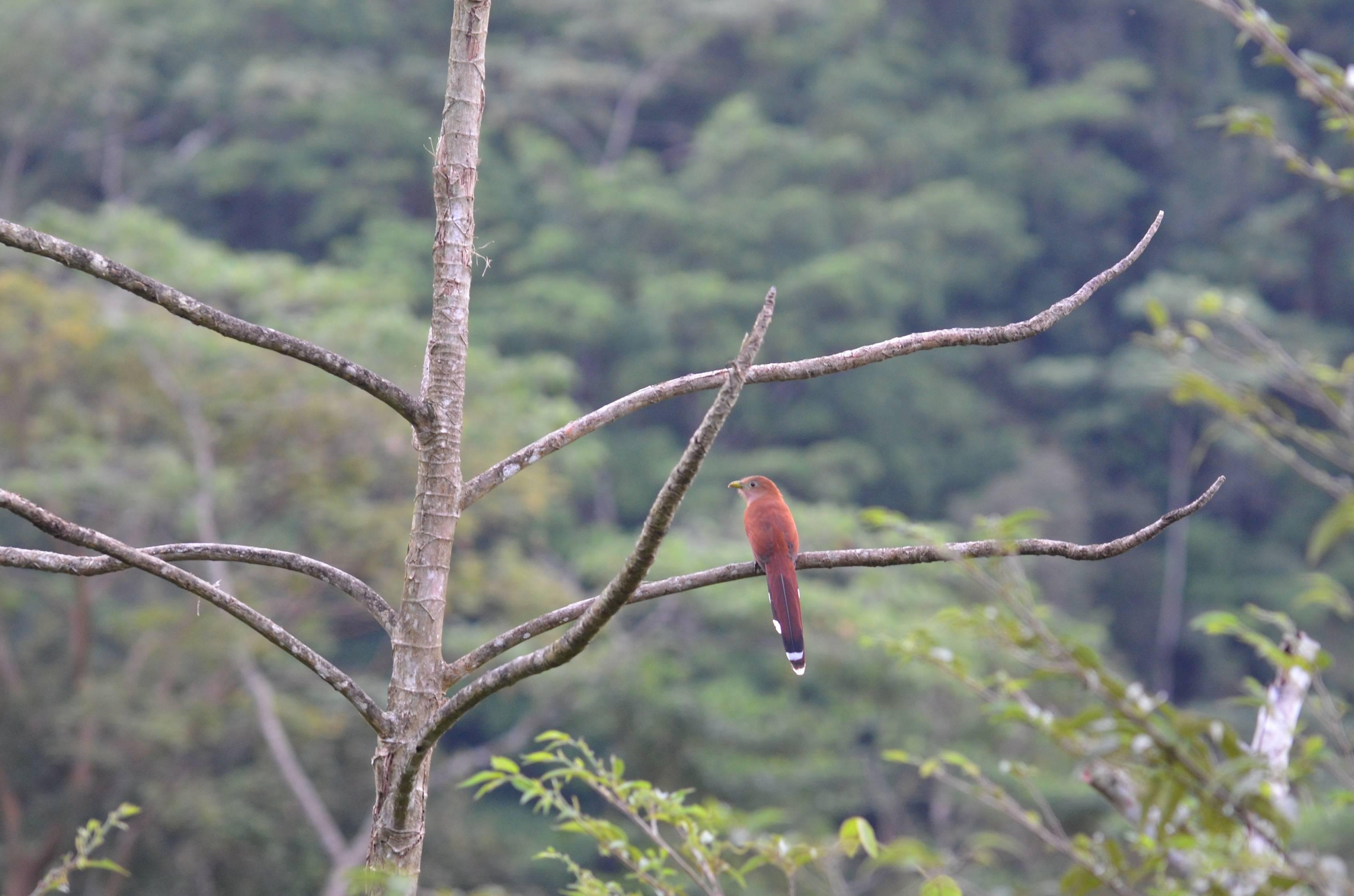 Tapanti-Maziso of Death National Park