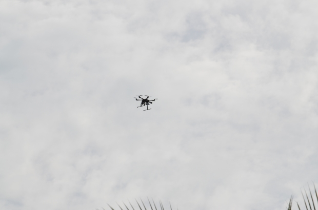 This drone was also a lifer for me too.