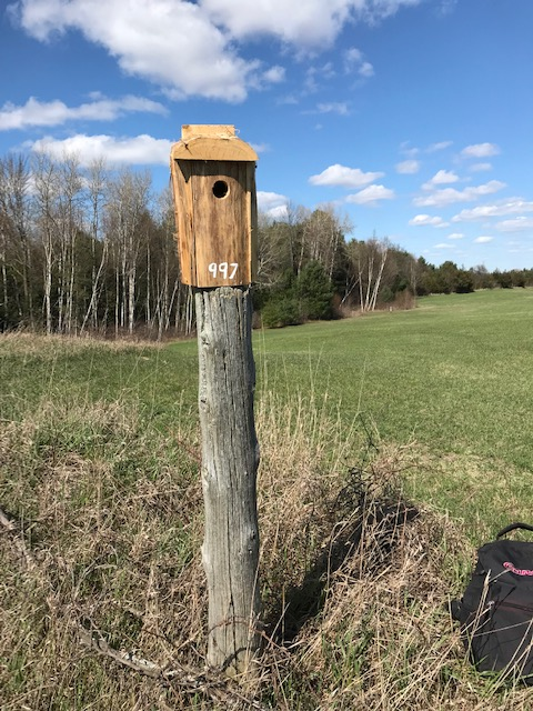 Eastern Bluebird nest box 3